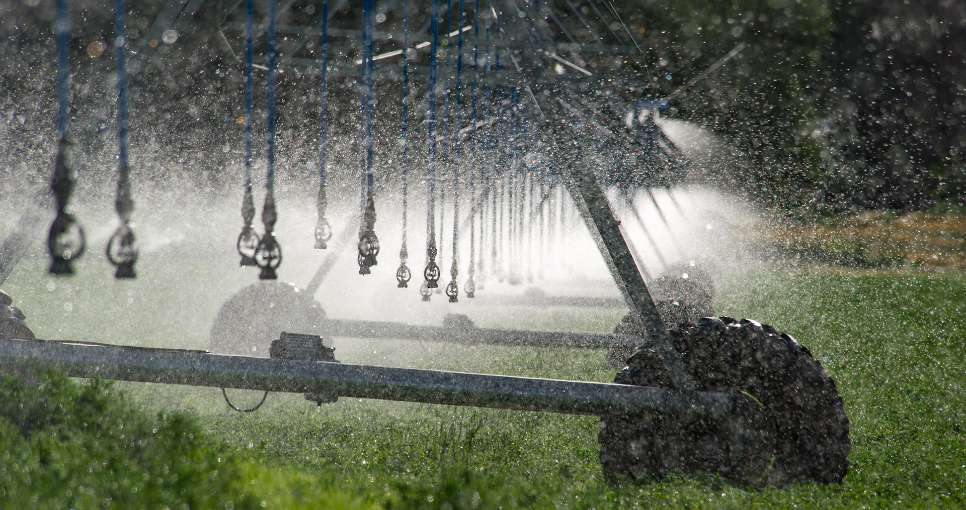irrigation sprinklers watering crops