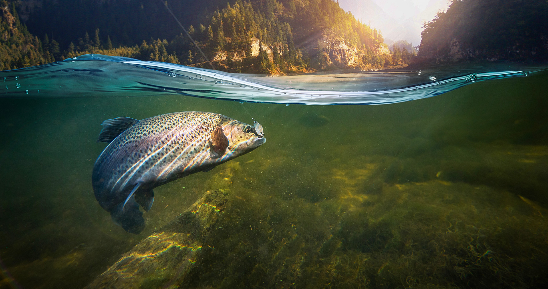 a fish on a line underwater