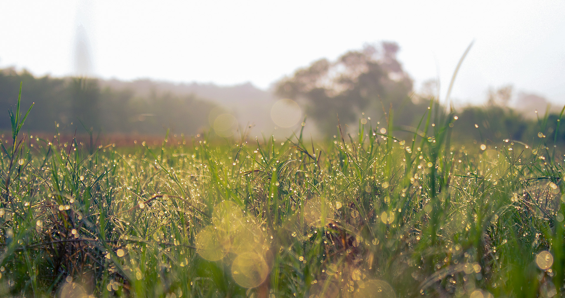 a field of grass covered in morning dew