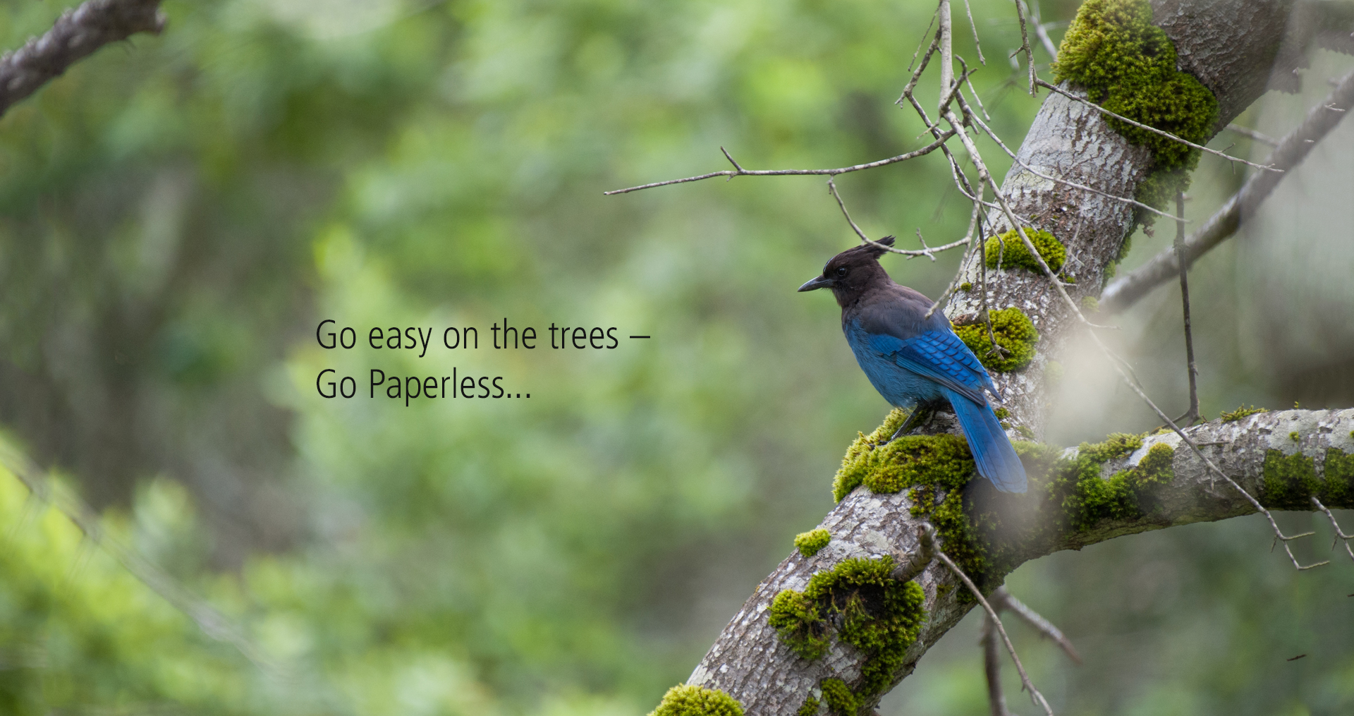 Go easy on the trees–Go paperless...