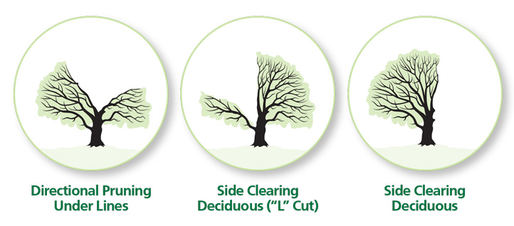 examples of different types of tree trimming