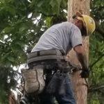 lineman on pole around pruned trees