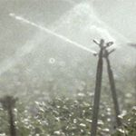 irrigation_sprinklers_in_action